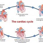 Sëmundjet e zemrës